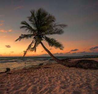 Mexican Beach - Obrázkek zdarma pro 208x208