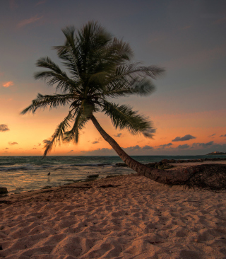 Mexican Beach - Obrázkek zdarma pro 352x416