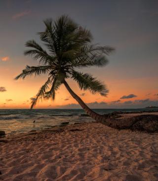 Mexican Beach - Obrázkek zdarma pro Nokia C3-01 Gold Edition