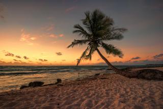 Mexican Beach - Obrázkek zdarma pro 220x176