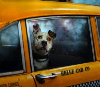 Yellow Cab Dog - Obrázkek zdarma pro iPad 2