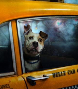 Yellow Cab Dog - Obrázkek zdarma pro Nokia Asha 310