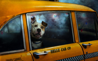 Yellow Cab Dog - Obrázkek zdarma pro Samsung Galaxy S6 Active
