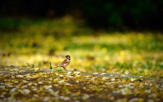 Little Sparrow Picture for Android, iPhone and iPad