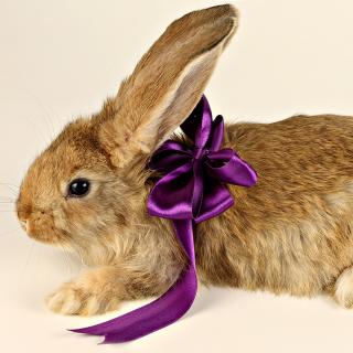 Rabbit with Bow - Obrázkek zdarma pro iPad mini