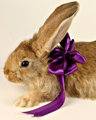 Rabbit with Bow - Obrázkek zdarma pro 176x220