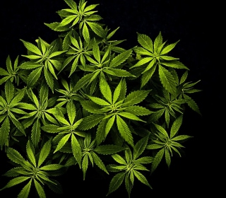 Cannabis Mary Jane - Obrázkek zdarma pro iPad mini 2