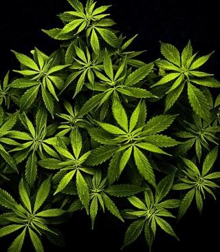 Cannabis Mary Jane - Obrázkek zdarma pro Nokia 206 Asha