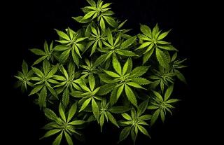 Cannabis Mary Jane - Obrázkek zdarma pro Sony Xperia Z1