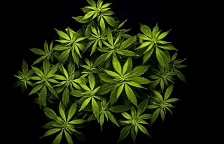 Cannabis Mary Jane - Obrázkek zdarma pro Android 1080x960