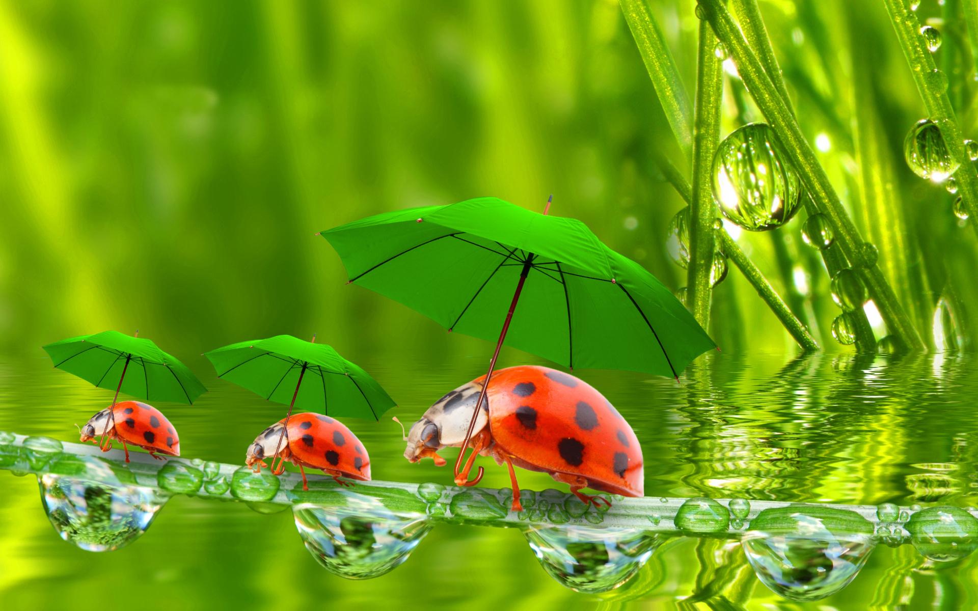 Funny ladybugs fondos de pantalla gratis para widescreen for Fondos de pantalla ordenador gratis