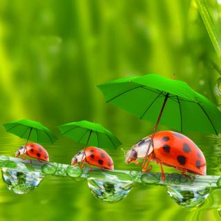 Funny Ladybugs - Obrázkek zdarma pro 208x208