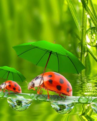 Funny Ladybugs - Obrázkek zdarma pro 320x480