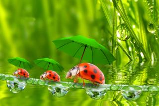 Funny Ladybugs - Obrázkek zdarma pro Samsung Galaxy S6 Active