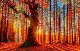 Forest Autumn Sunset Picture for Android, iPhone and iPad