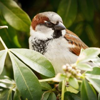 Sparrow - Obrázkek zdarma pro 1024x1024