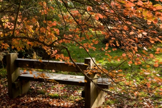 Autumn Bench Wallpaper for Android, iPhone and iPad