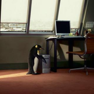 Penguin and Computer - Obrázkek zdarma pro 208x208