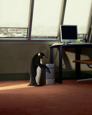 Penguin and Computer - Obrázkek zdarma pro Nokia Asha 502
