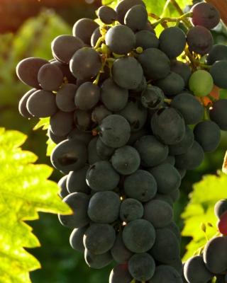 Bunch of Grapes - Obrázkek zdarma pro 480x640