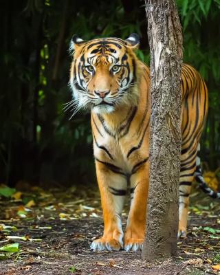 Bengal Tiger - Obrázkek zdarma pro Nokia X7