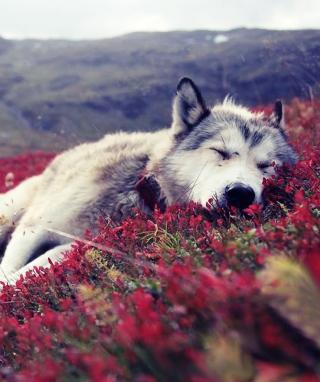 Wolf And Flowers - Obrázkek zdarma pro 480x640
