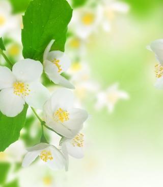 Jasmine Blossom - Obrázkek zdarma pro Nokia X2