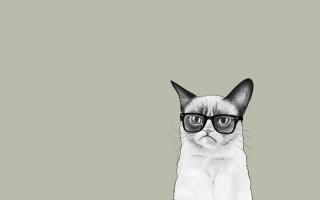 Grumpy Cat - Obrázkek zdarma pro LG P500 Optimus One