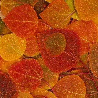 Autumn leaves with rain drops - Obrázkek zdarma pro iPad mini 2