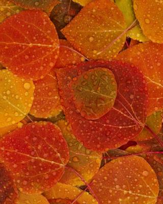 Autumn leaves with rain drops - Obrázkek zdarma pro Nokia C5-03