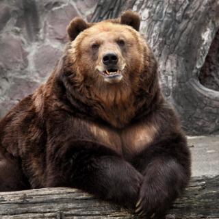 Bear in Zoo - Obrázkek zdarma pro 2048x2048