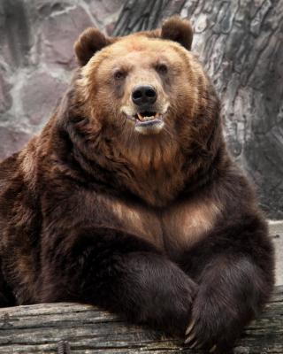 Bear in Zoo - Obrázkek zdarma pro iPhone 5C
