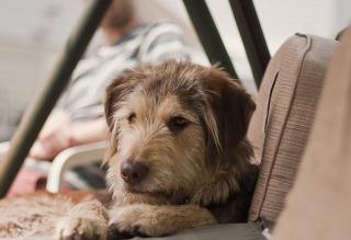 Картинка Sad Dog на телефон
