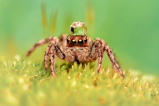 Poisonous Spider Tarantula Background for Android, iPhone and iPad
