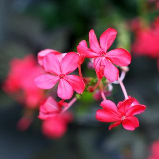 Macro Petals Photo - Obrázkek zdarma pro iPad mini 2