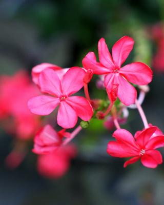 Macro Petals Photo - Obrázkek zdarma pro Nokia 5233