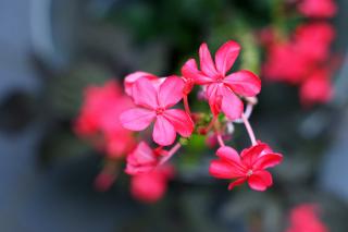 Macro Petals Photo - Obrázkek zdarma pro Android 320x480