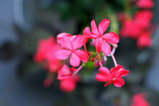 Macro Petals Photo - Obrázkek zdarma pro Samsung Galaxy S3