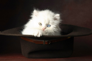 Cat In Hat Wallpaper for Android, iPhone and iPad