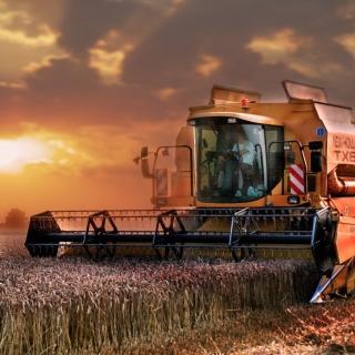 Autumn Wheat Cereal - Obrázkek zdarma pro 2048x2048