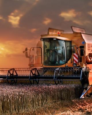 Autumn Wheat Cereal - Obrázkek zdarma pro 352x416