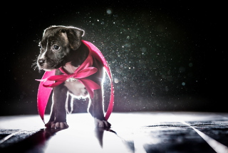 Cute Puppy In Pink Cloak Wallpaper for Android, iPhone and iPad