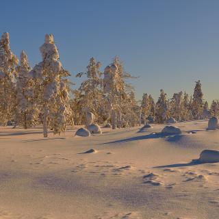Thaw in Winter Morning - Obrázkek zdarma pro 128x128