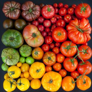 Tomatoes - Obrázkek zdarma pro 320x320