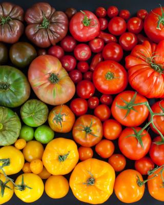 Tomatoes - Obrázkek zdarma pro 352x416
