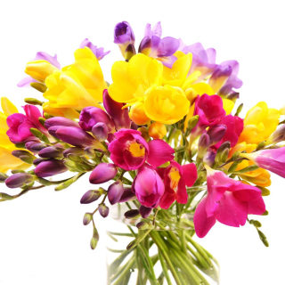 Summer Flowers Bouquet - Obrázkek zdarma pro 2048x2048