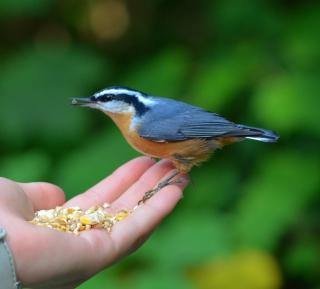 Feeding Bird - Obrázkek zdarma pro 208x208
