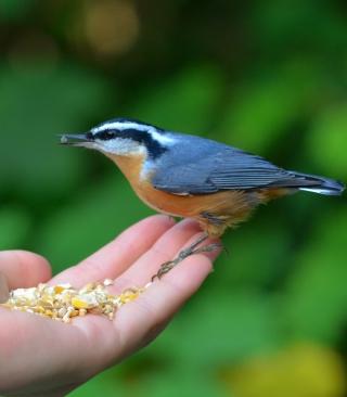 Feeding Bird - Obrázkek zdarma pro 640x960