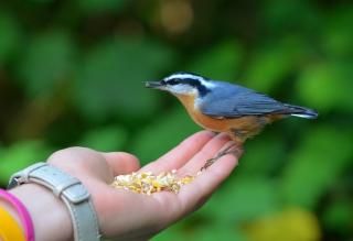 Feeding Bird - Obrázkek zdarma pro 320x240