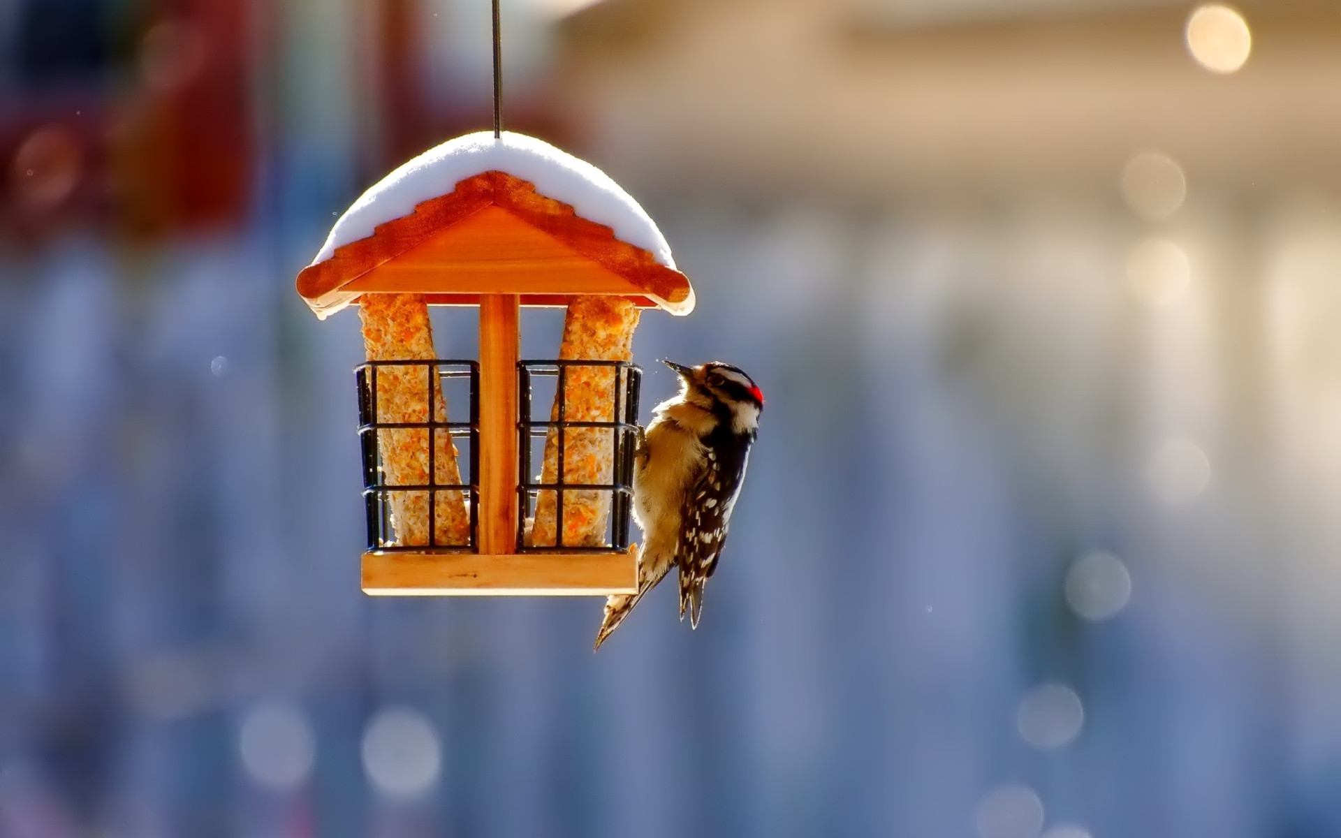 Winter Bird House Wallpaper for Widescreen Desktop PC ...